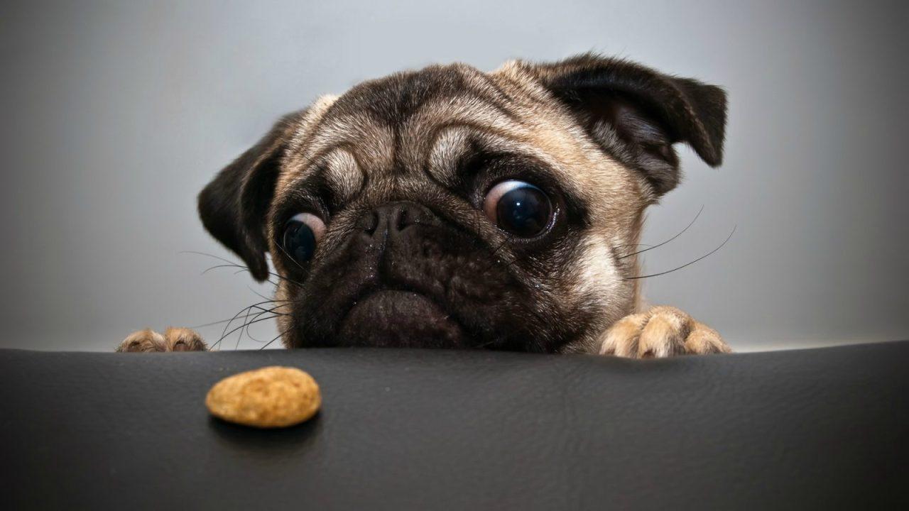 Měl by mazlíček jíst bezobilná krmiva?
