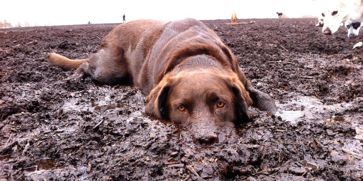 Moji psi mají rádi výkaly a bláto. Co je k tomu vede?