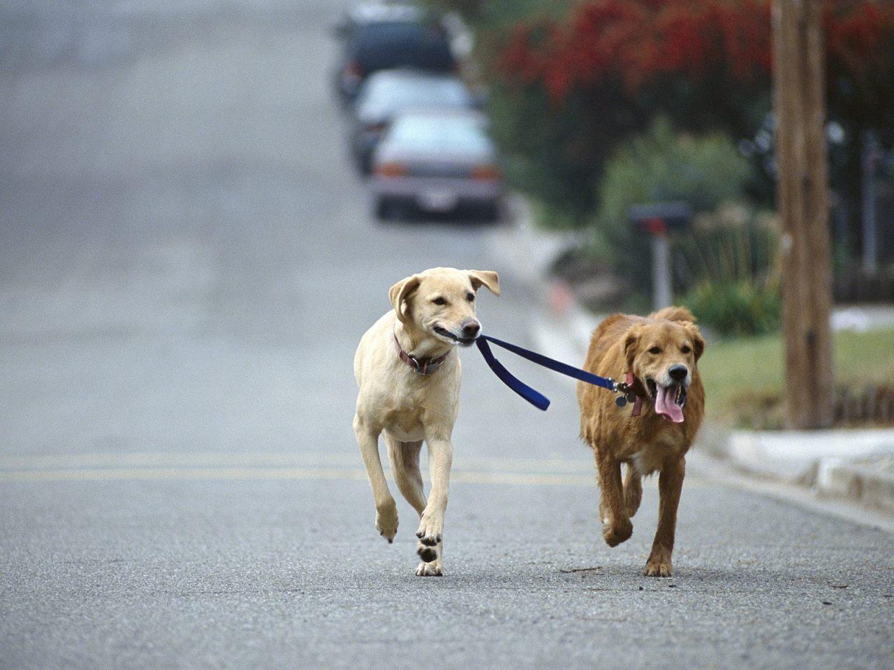 Blízká setkání s volně pobíhajícím psem