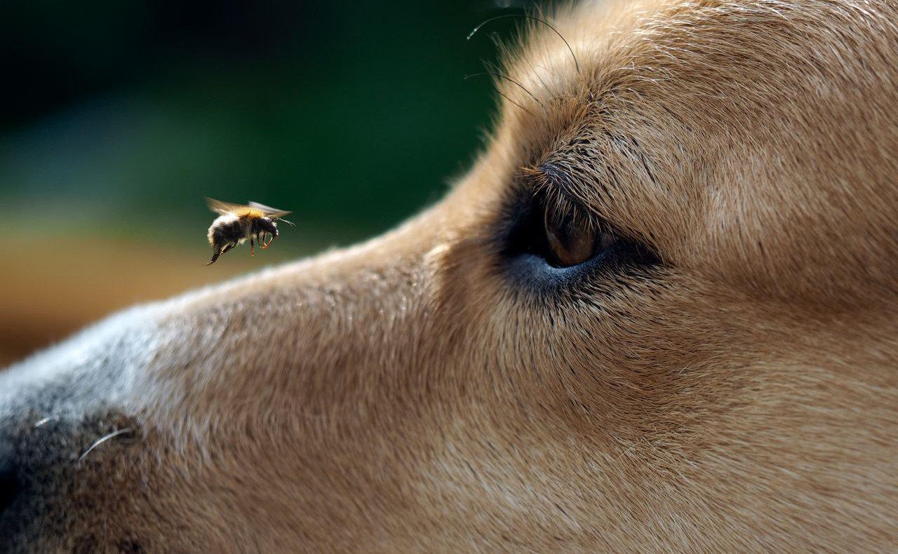 Čerstvý med pro psa?