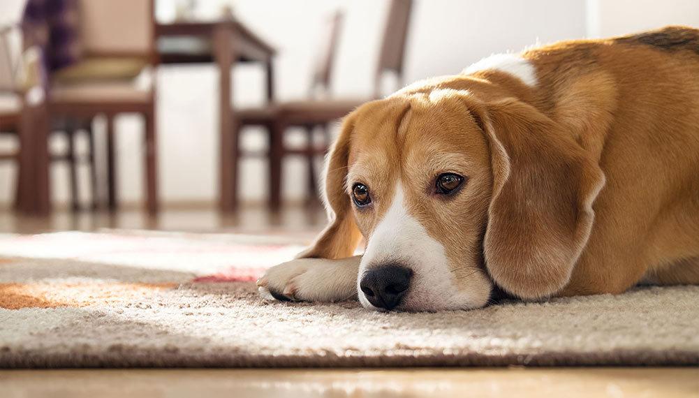 Jídla, která by psi nikdy neměli jíst